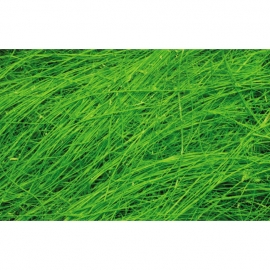 Sisal Fiber - Bright Green